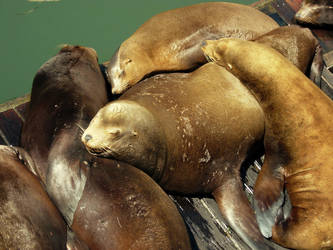 Sea lions like cuddling too by waytoohyper