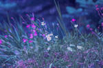 meadow by AnnieFF5