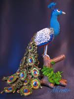 Peacock by Mirettetoys