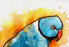Blue ringneck - watercolors by Okoe