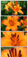 -: Tiger Lily :- by the-planr