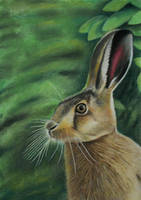 European wild hare - the swift runner by Vishvesh99