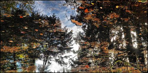 Arboretum - 24 by SUDOR