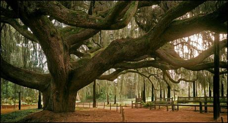 Arboretum - 27 by SUDOR