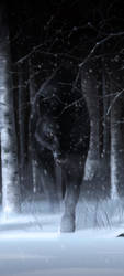 Wolf in the woods by KEGO44