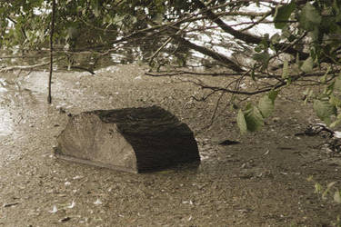 Submerged Tree Stump by dpw-shane
