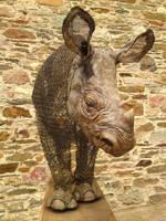 Young Rhino by mattcummings