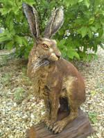 Hare by Matt Cummings by mattcummings