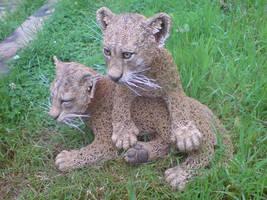 Lion Cubs by mattcummings