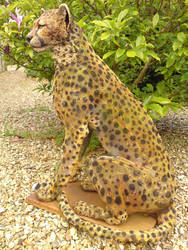 Cheetah by mattcummings