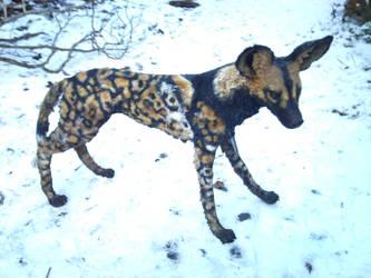 African Wild-Dog by mattcummings