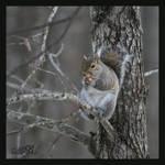 Little Nibbler by Silver-Dew-Drop