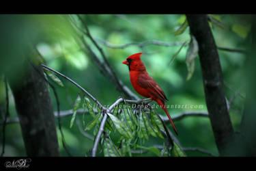 Scarlet Silence by Silver-Dew-Drop