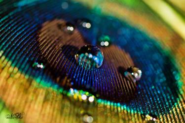 Vivacity by Silver-Dew-Drop