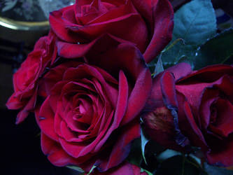 Red Roses by starsinmyteacup