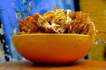 edible mushrooms by samo19