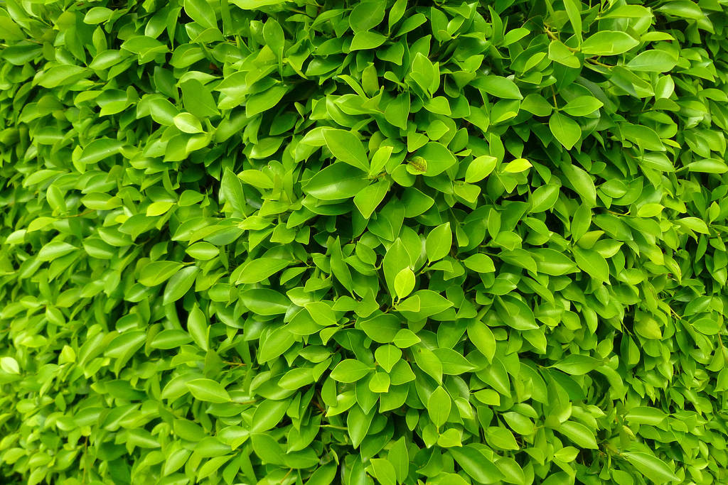 all green by samo19