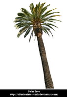 Palm-tree by oilusionista-stock