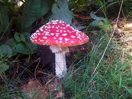 Mushroom stock 2 by Dingelientje-stock