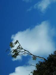 Fairly Random Tree by bitdiverse