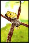 Spider 2 by MaskresZ
