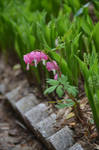 Bleeding Hearts by Wingedisis16