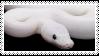 Leucistic Ball python #3 by Punk-Soda