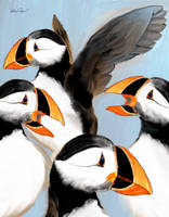 Puffins are cute by altergromit