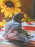 Sunflower and the bird by altergromit