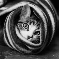 funny cat by govorit-vsluh