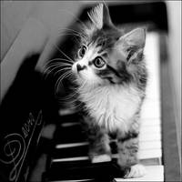 piano cat by govorit-vsluh