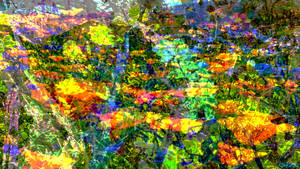 Wild Splash of Colour by nosuchthingasnothing