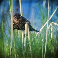 bird's eye view by bluePartout