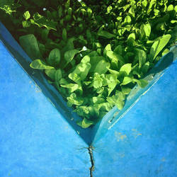 little green space by bluePartout
