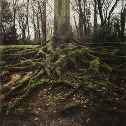 about roots by bluePartout