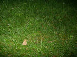 Small Toad in the Grass by katamariluv
