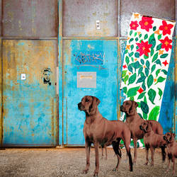 shining flowers by Pierre Lagarde / morgondotter by morgondotter