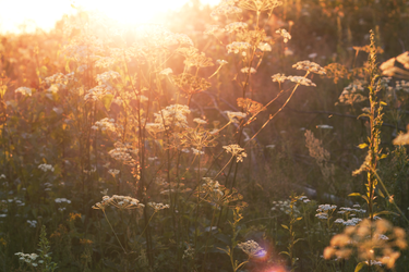 Sunshine by nomatterwhy