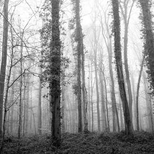 Brouillard II by MERYFIELD