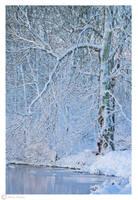 Frozen world by Moonbird9