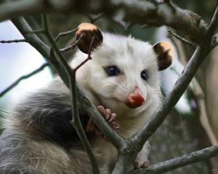 Opossum by YotsukiCrashTaylor