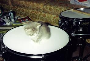 Drummer Kitty by drumgirl