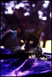 Kitty in Purple by kbhollo