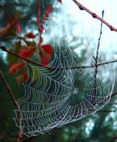 Spider's Home by Birthstone