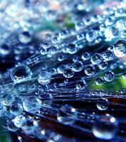 Magical Dews by Birthstone