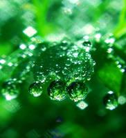 Emerald Stone by Birthstone