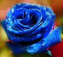 Blue Rose by Birthstone