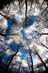 Trees by pnewbery