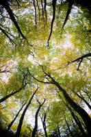 Trees - Fall by pnewbery