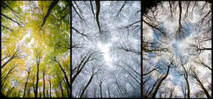 triptych of trees by pnewbery